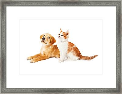 Puppy And Kitten Looking To Side Framed Print
