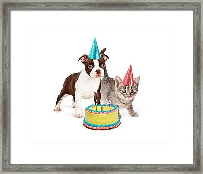Puppy And Kitten With Birthday Cake Framed Print by Susan Schmitz