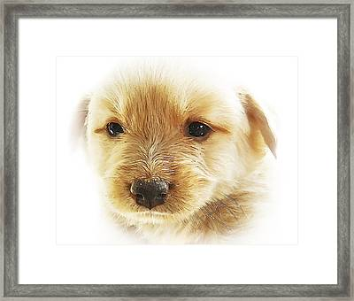 Puppy Art Framed Print by Svetlana Sewell