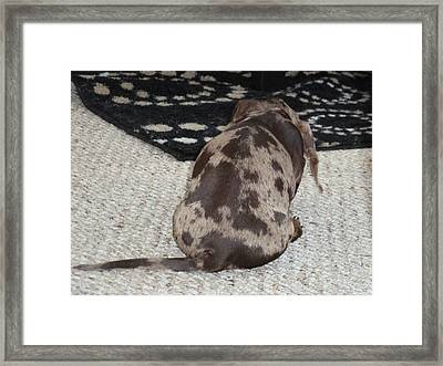 Puppy Behind Framed Print