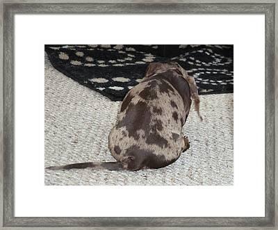 Puppy Behind Framed Print