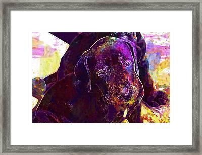 Puppy Dog Great Dane Black Pet  Framed Print
