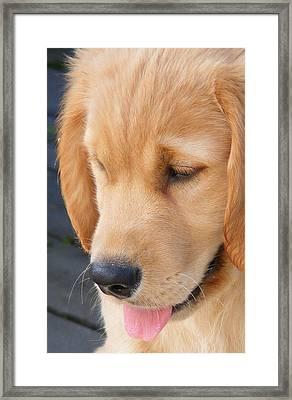 Puppy Face Framed Print