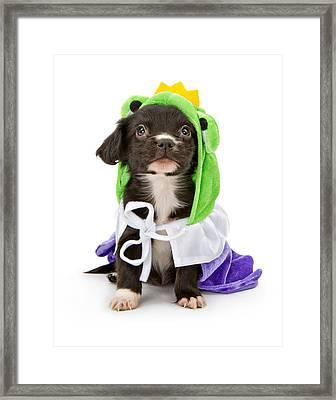 Puppy Frog Prince Framed Print by Susan  Schmitz