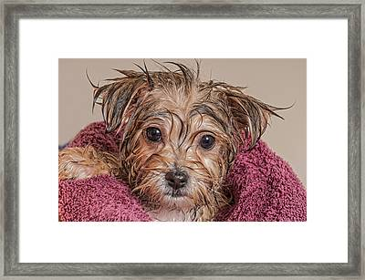 Puppy Getting Dry After His Bath Framed Print