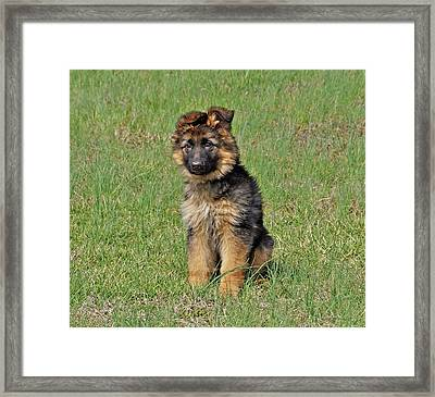 Puppy Halo Framed Print by Sandy Keeton