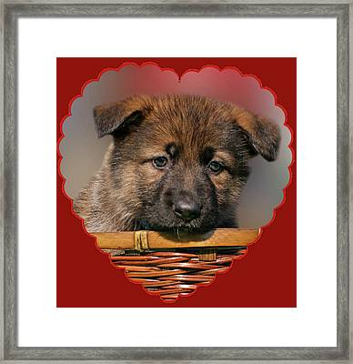 Puppy In Red Heart Framed Print by Sandy Keeton