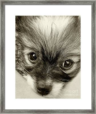 Puppy In Sepia By Kaye Menner Framed Print by Kaye Menner