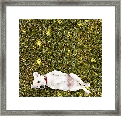 Puppy In The Grass Framed Print by Diane Diederich