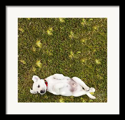 Puppies Playing Framed Prints
