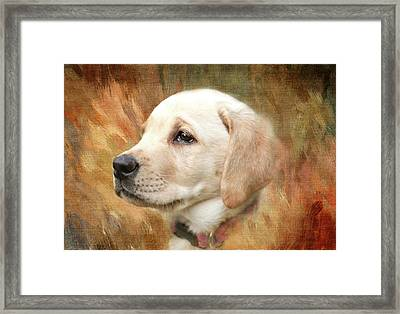 Puppy In The Grass Framed Print