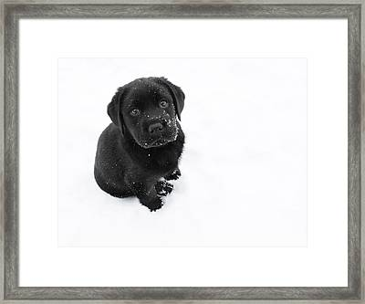 Puppy In The Snow Framed Print