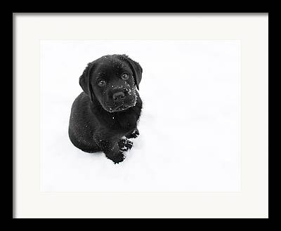 White Puppy Framed Prints