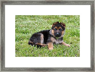 Puppy In The Spring Framed Print by Sandy Keeton