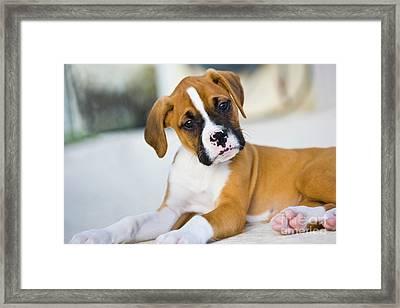 Puppy Framed Print by Juan  Silva