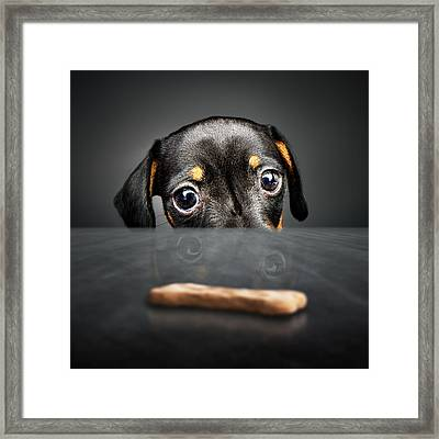 Puppy Longing For A Treat Framed Print by Johan Swanepoel