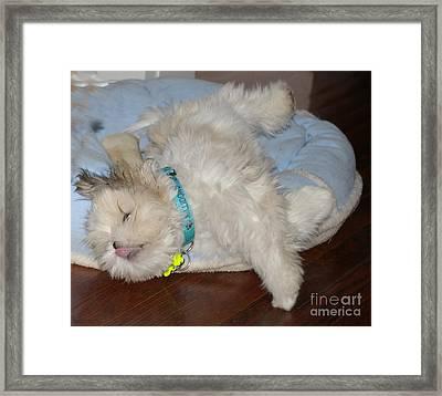 Puppy Lover Framed Print by Beth Saffer