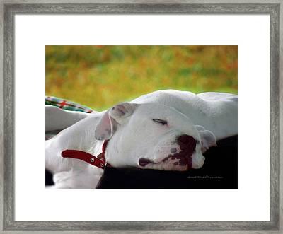Bulldog Puppy Art  3 Framed Print