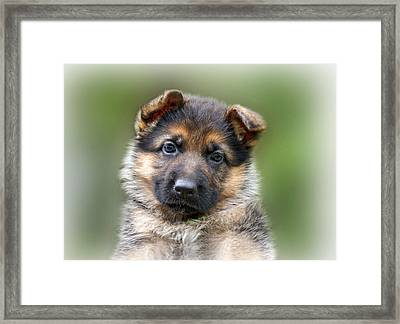 Puppy Portrait Framed Print by Sandy Keeton