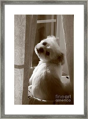 Puppy Pose Framed Print by Lynn Reid