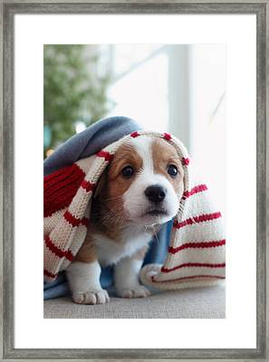 Puppy Sitting Under Blanket Framed Print by Gillham Studios
