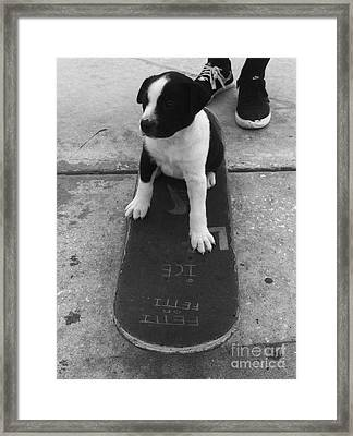 Puppy Skater Framed Print by WaLdEmAr BoRrErO