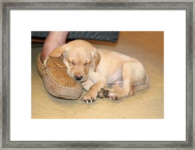 Puppy Sleeping On Daddy's Foot Framed Print