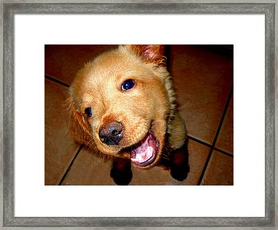 Puppy Smile Framed Print by Irma BACKELANT GALLERIES