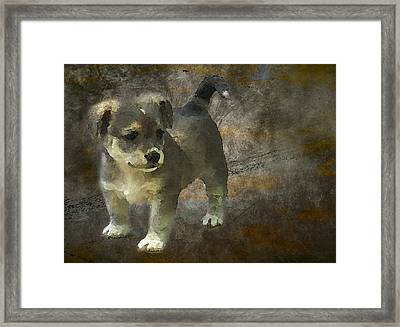 Puppy Framed Print by Svetlana Sewell