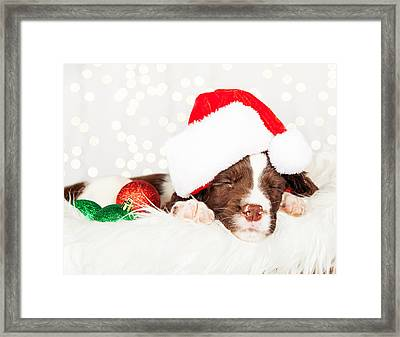 Puppy Wearing Santa Hat While Napping On Fur At Home Framed Print
