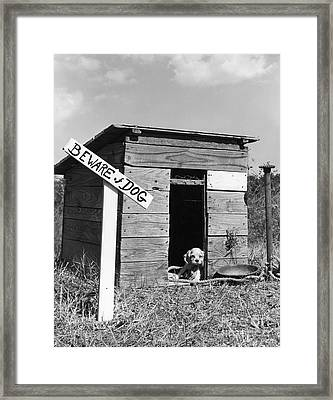 Puppy With Beware Of Dog Sign, C.1950s Framed Print