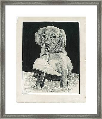 Puppy With Shoe Framed Print by Samuel Showman