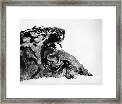 Puppy With Stuffed Tiger, C.1950s Framed Print by H. Armstrong Roberts/ClassicStock