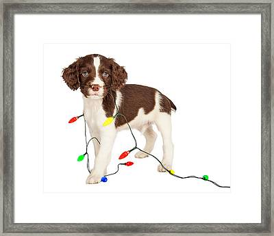 Puppy Wrapped In Christmas Lights Framed Print