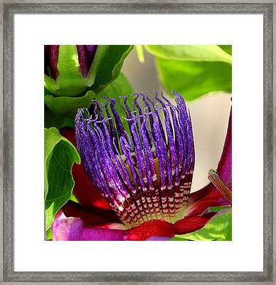 Puprle Passion Framed Print
