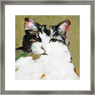 Pur-fect Pose Framed Print by Michelle Winnie
