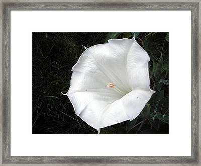 Pure And Lovely II Framed Print by Jeanette Oberholtzer