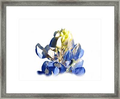 Pure Blue Bonnet Framed Print by James Granberry