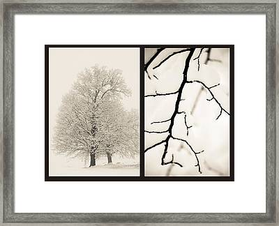 Pure Framed Print by Calinciuc Iasmina