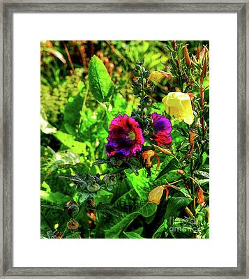 Pure Delight Framed Print