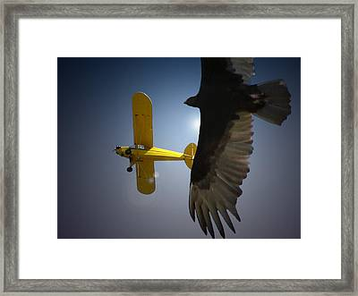 Pure Flight Framed Print