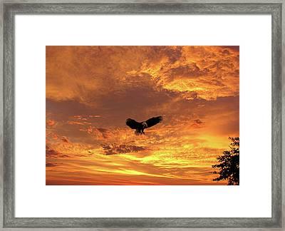 Pure Freedom Framed Print