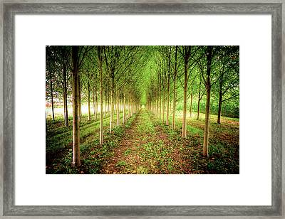 Framed Print featuring the photograph Craven Farms by Spencer McDonald