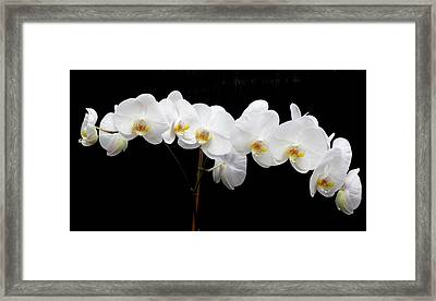 Pure Orchid Framed Print by Jeanette Oberholtzer