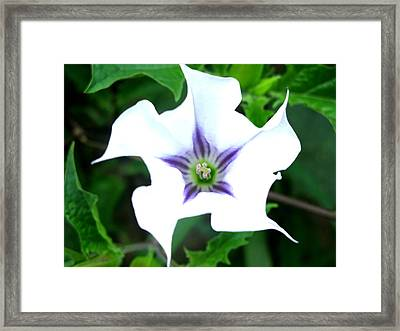 Pure Passion Framed Print by Brittany H