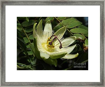 Pure Passion Framed Print