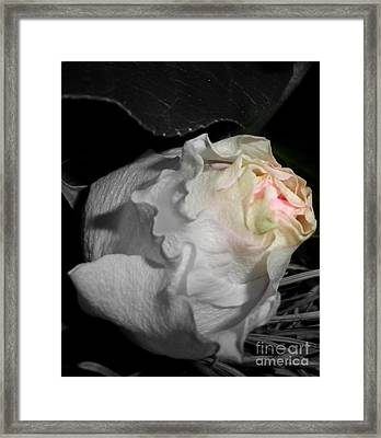 Pure Perfection Framed Print by Sian Lindemann