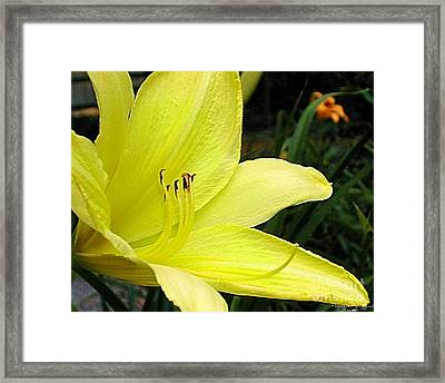 Framed Print featuring the photograph Pure Sunshine by Patricia Griffin Brett