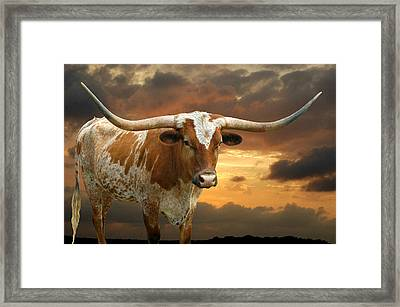 Ready To Rumble Framed Print by Robert Anschutz