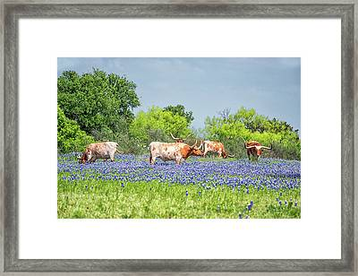 Pure Texas Framed Print by Victor Culpepper